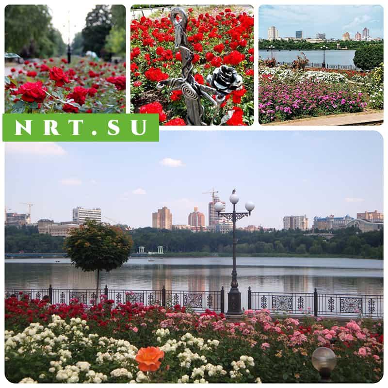 Почему Донецк называют Городом миллиона роз